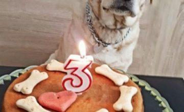 Torta per cani